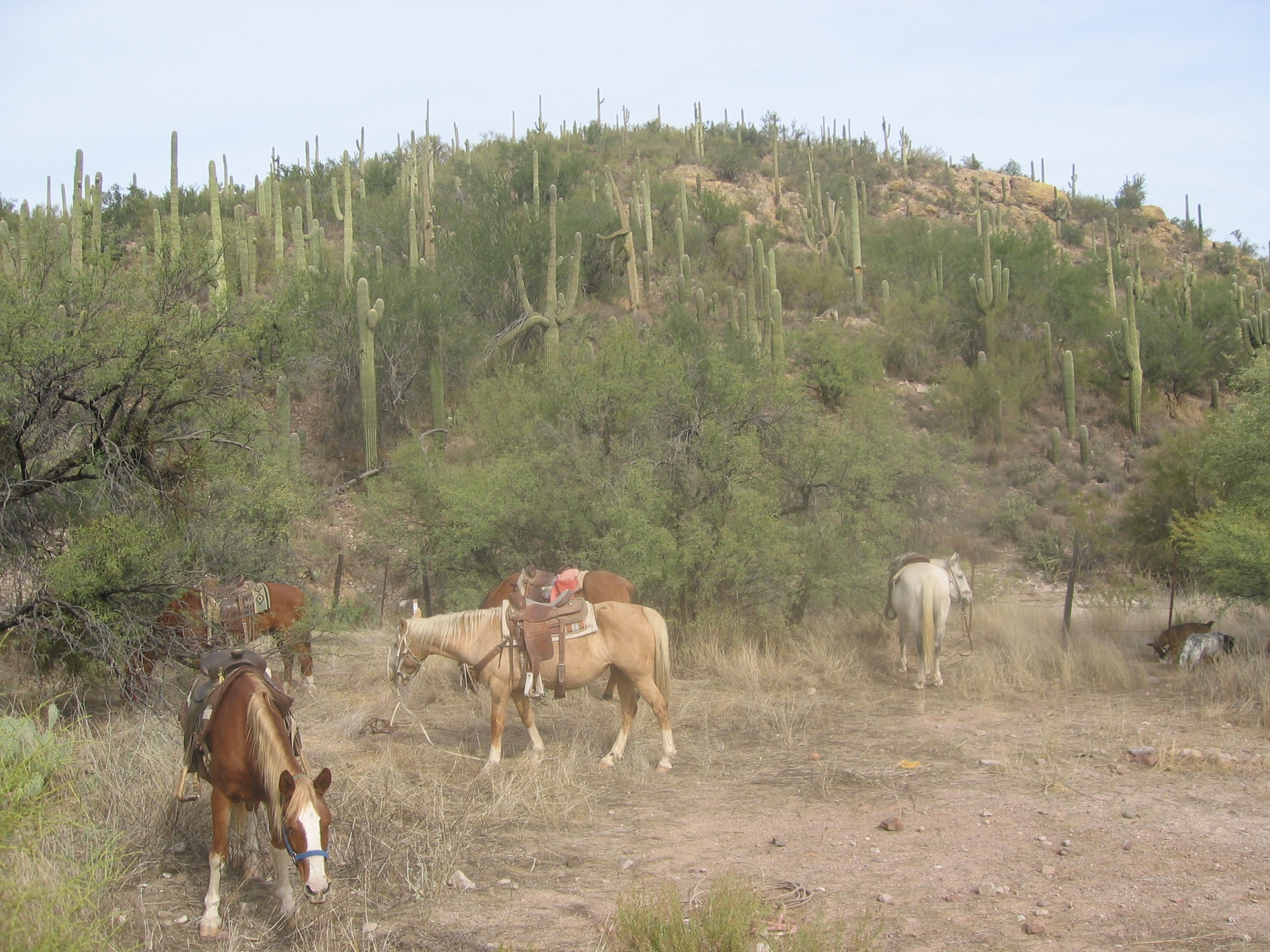 horse stables Arizona. Rusty's and Betty's cowboy camp